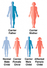 genetic map of carrier mutation in a family